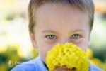 blue eyes yellow flower