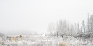 frosty winter scene