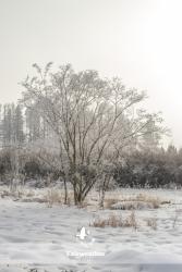 frosty_winter-4046