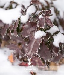 frosty_winter-4048