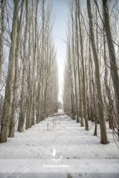 winter scene wide angle