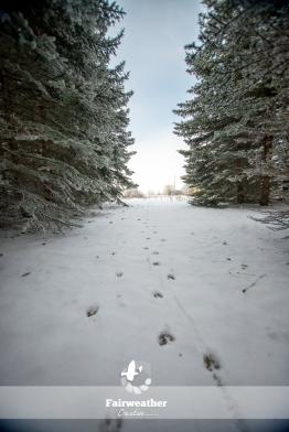 frosty_winter-4074