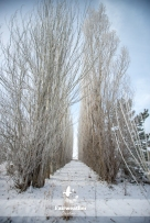 winter trees row