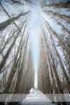winter tree perspective shot