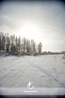 frosty_winter-4085