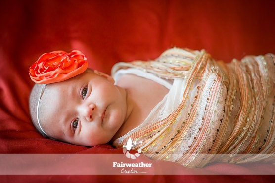 Newborn Photography Swaddled